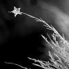 Starcreep's picture